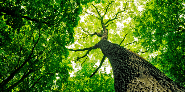 How_to_Market_Your_Tree_Service_for_Dramatic_Growth