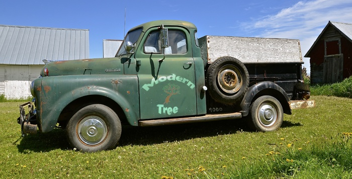 How To Build A Tree Service Brand.jpg