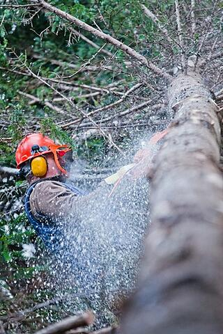 Good tree service leads vs bad tree service leads