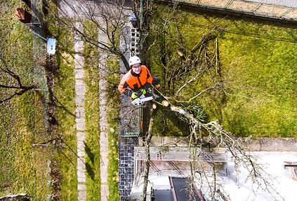 Professional Tree Removal Business