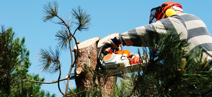 How Google Affects Your Tree Service Business