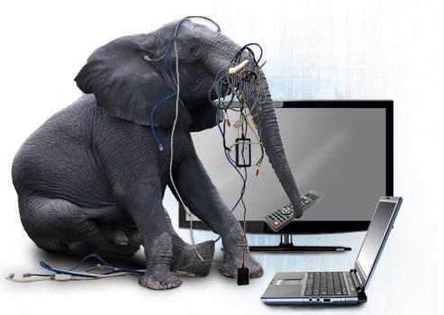 Elephant_Artwork
